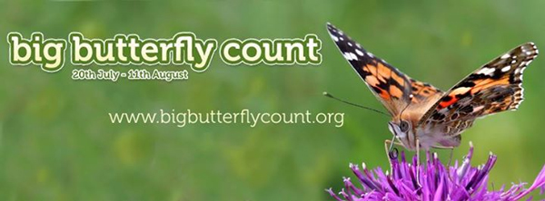 Big-Butterfly-Count-2013-Banner-600