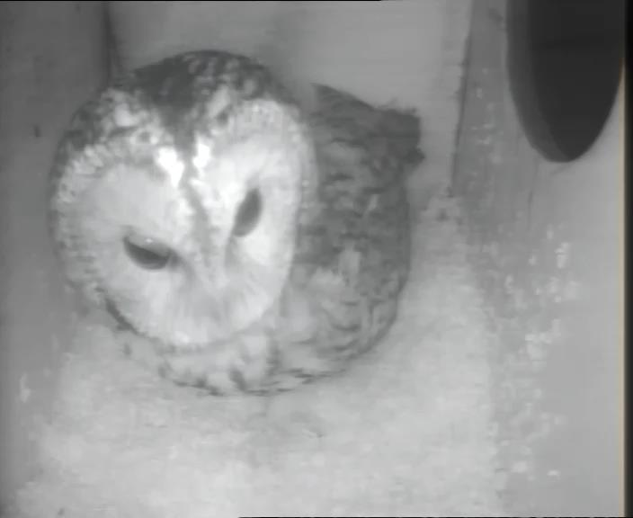 Owl Box 2013-09-27 03-23-03.560