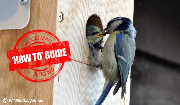 Blue-Tit-On-Nest-Box-3-600
