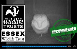 Essex-Barn-Owl-Webcam-3