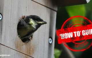 Great-Tit-Guide-600