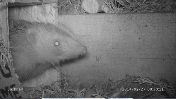 Hog-Using-Hog-Box-1-270214-600