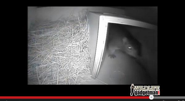 Unexpected-Visitors-Hog-Box-Thumb-600