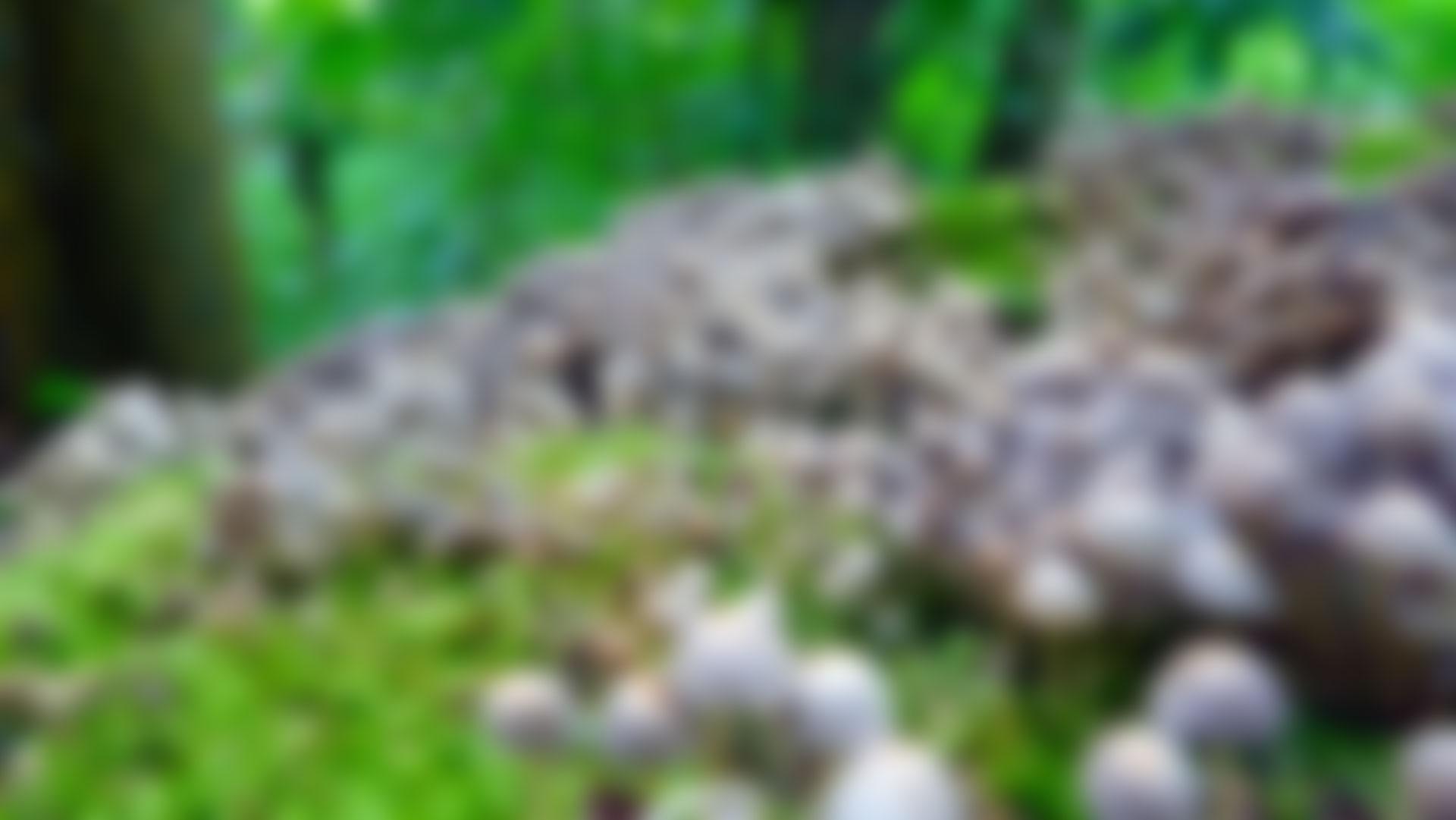 Clustered-Bonnet-Blur-1