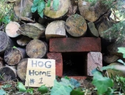 450-Hog-Home-Bricks-1