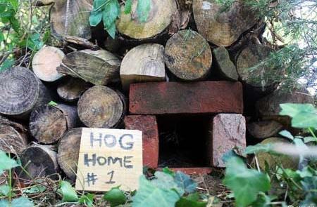 450-Hog-Home-Bricks-1