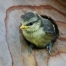 Which-Birds-Use-Nest-Boxes