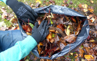 Clearing-Leaves-3-620