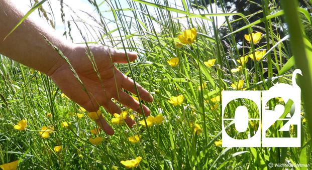 30-Days-Wild-Day-2-Hand-In-Grass-621