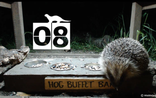 30-Days-Wild-Day-7-Hog-Buffet-Bar-3-Banner-621