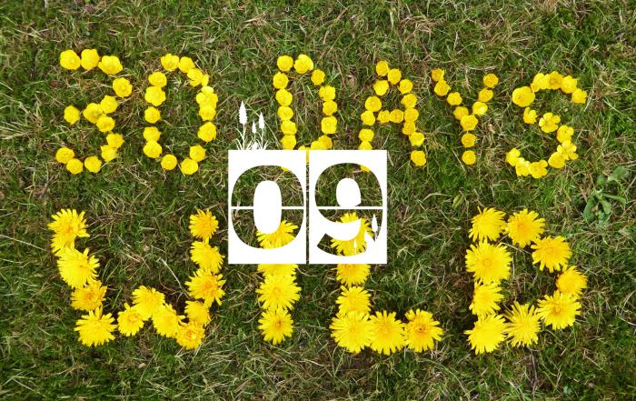 30-Days-Wild-Day-9--Flowers-Option-Banner-621