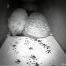 Mammal-Footprint-Tunnel-3-Featured-Image-621
