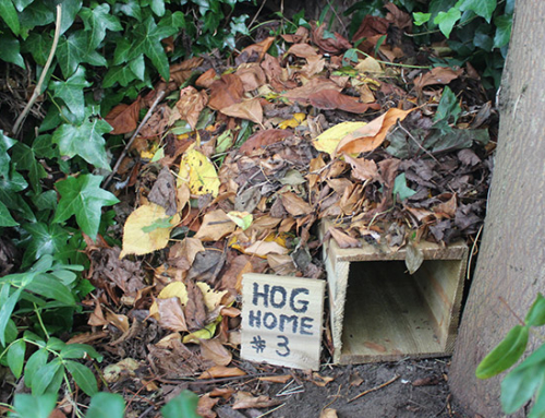 Make a Hedgehog Home Out Of An Old Terracotta Planter