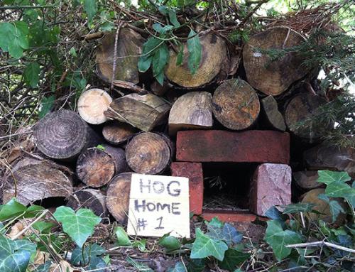 Make A Hedgehog Home Out Of Bricks
