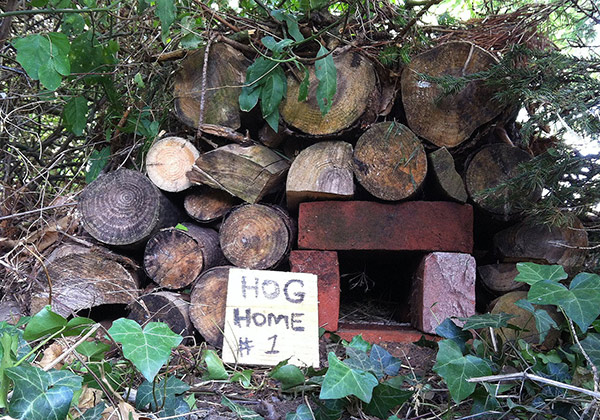 Hog-Home-Brick-600