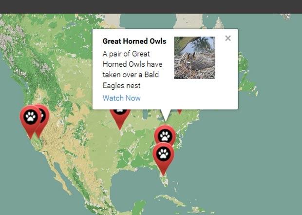 Great-Horned-Owl-1-260116