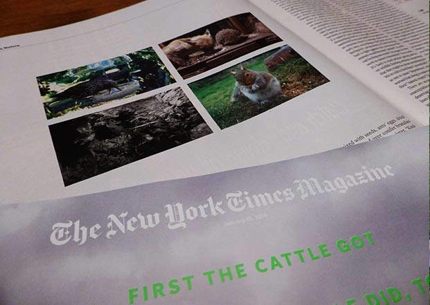New-York-Times-2-220116-620