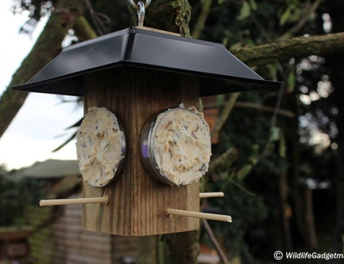 Make A Bird Fat Feeder Using Empty Seedball Tins