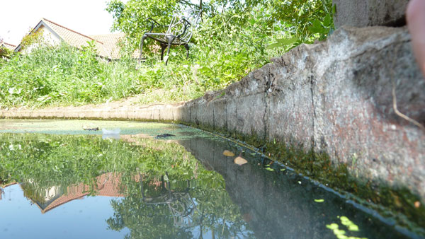 My Top Tips For Providing Water For Wildlife In Hot Weather
