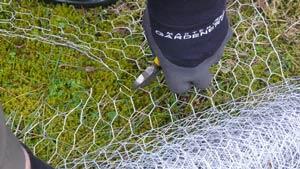 Collared-Dove-cutting-wire-2-300