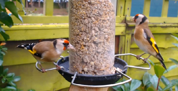 Squabbles And Crusty Legs – A Day At The Feeders