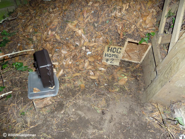 Bushnell-Trail-Cam-Overlooking-Hog-Home-2-600