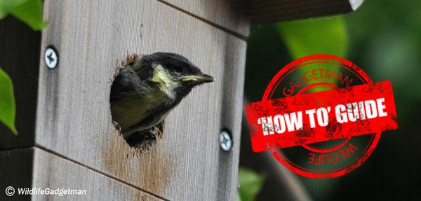 Great Tit – Nesting/Wildlife Camera Guide