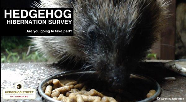 Hog-Hibernation-Survey-Banner-600