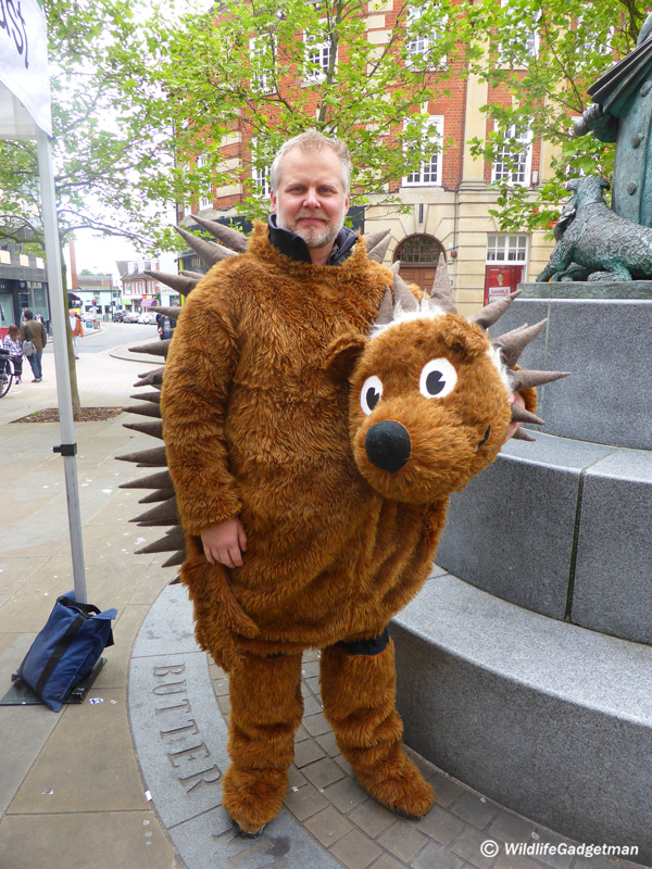 6c4870d4f288 I Dress Up As A Hedgehog To Support Suffolk Wildlife Trust ...