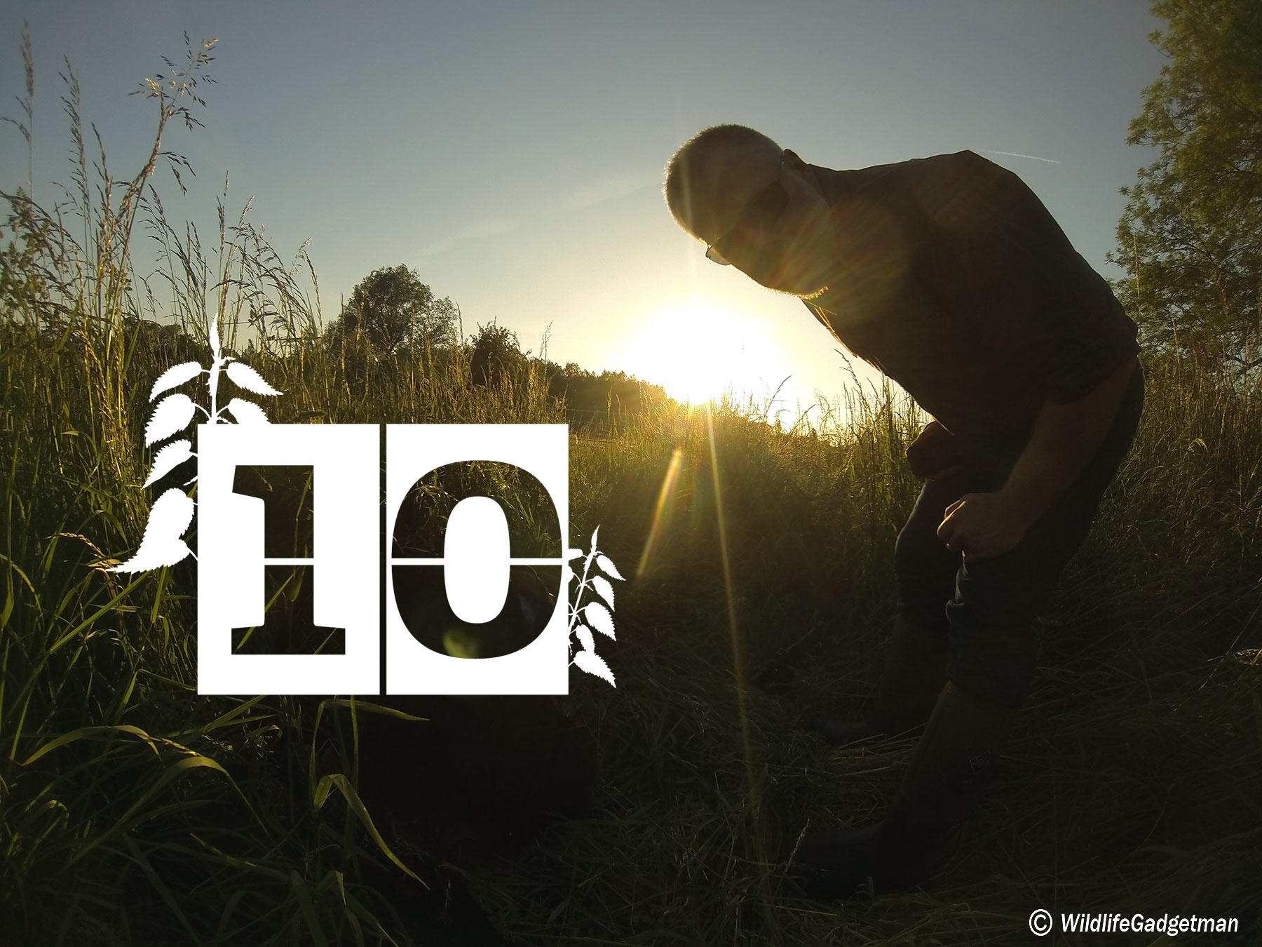 30 Days Wild Day 10 – Sunsets And Gadgets