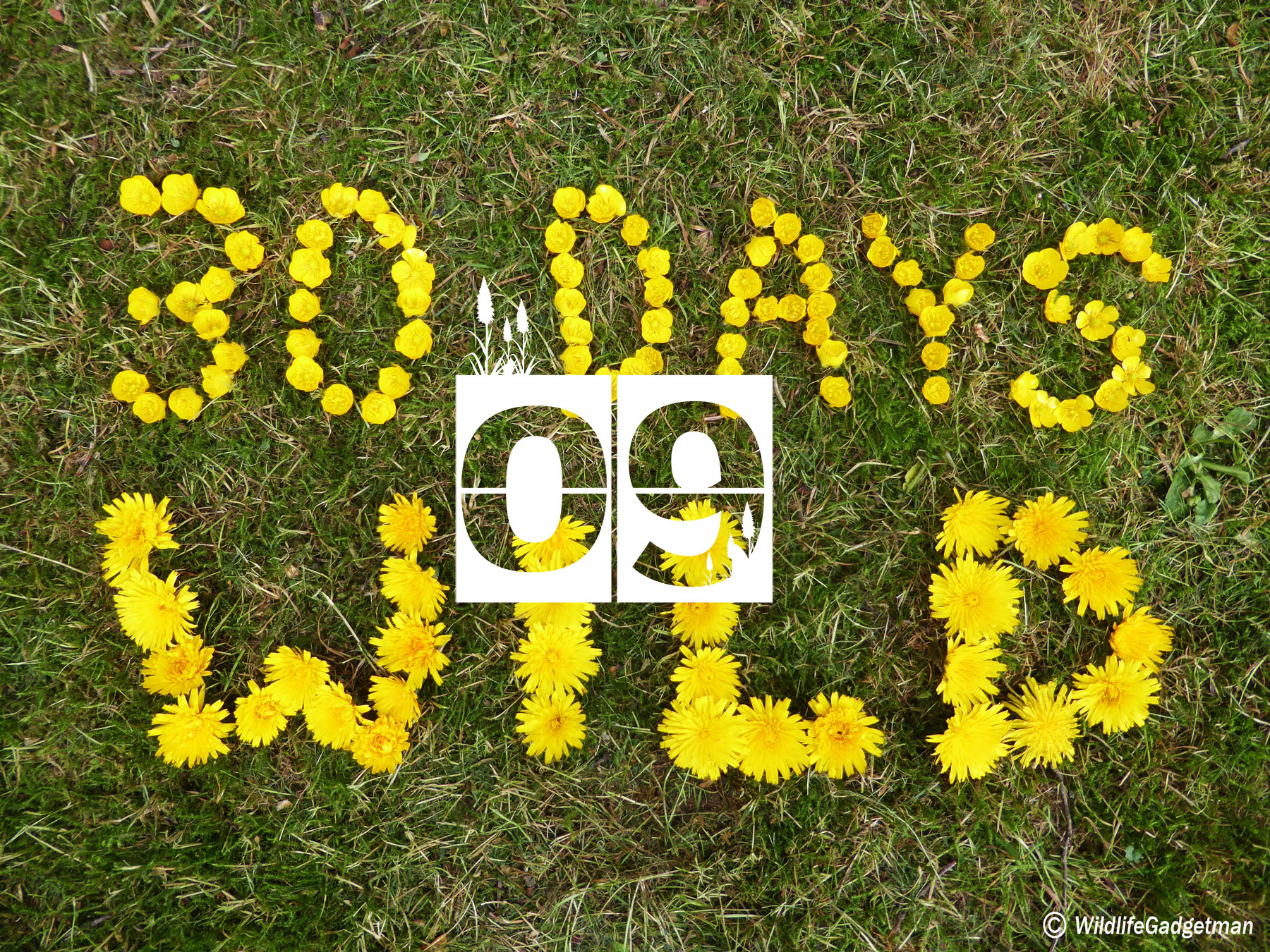 30 Days Wild Day 9 – Buttercups And Light Painting
