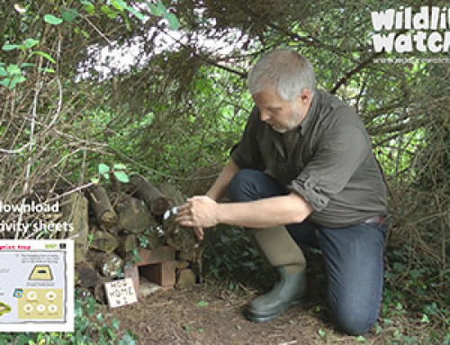 Using A Trail Cam To Monitor Your Hedgehog Box