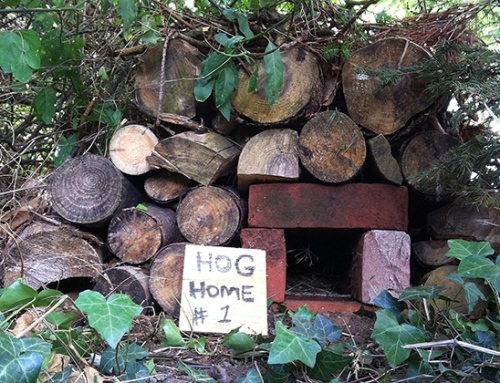 Make A Hedgehog Home Out Of Bricks