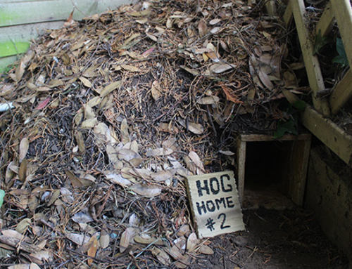 Make A Hedgehog Home Out Of A Plastic Storage Tub