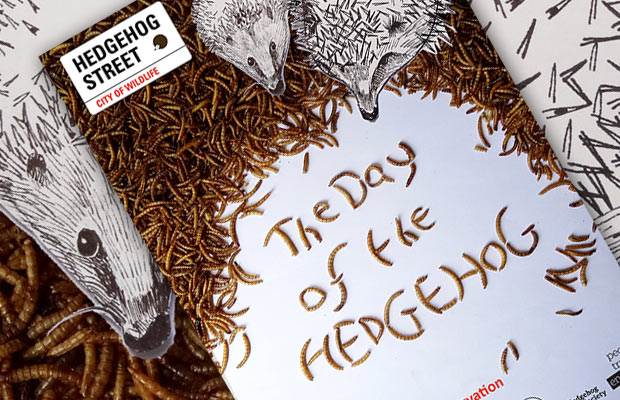The Day Of The Hedgehog