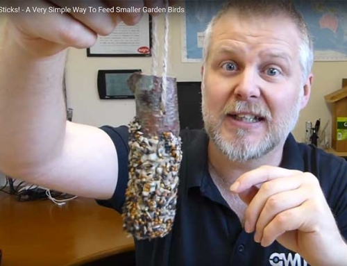 Fat Sticks! – A Very Simple Way To Feed Garden Birds