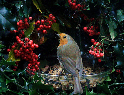 Make A Christmas Wreath Bird Feeder