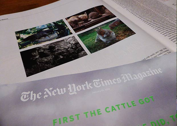 Wildlife Gadget Man Live Cams Appear In The New York Times Magazine.