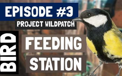 Episode 3 – Creating A Bird Feeding Station