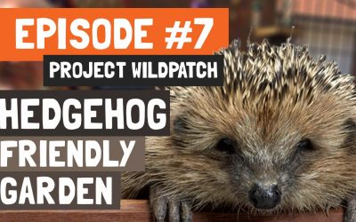 Episode 7 – How To Check Your Garden Is Wildlife Friendly.