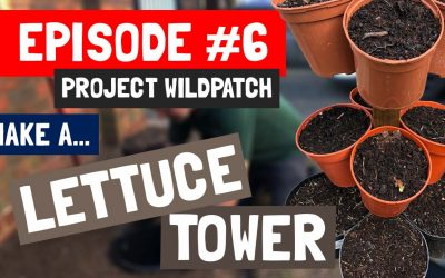 Episode 6 – How To Create A Lettuce Tower